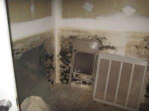 Asbestos-Mold-Lead-2-300x225